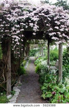 Photo about Pale pink clematis cascade over a wooden pergola and path. Image of bench, plants, bloom - 11003050 Garden Arbor, Garden Soil, Landscape Design, Garden Design, The Secret Garden, Garden Cottage, Garden Spaces, Dream Garden, Backyard Landscaping