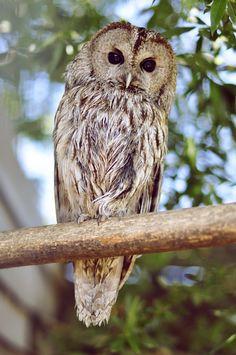 Owl at the mini zoo.