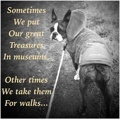 Sometimes we put our great treasures in museums, other times we take them for walks Must love dogs ... Boston Terriers Meme