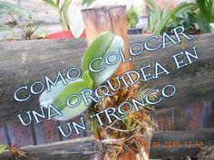 Curso de orquídeas on-line #8: Multiplicación y Obtención de nuevas plantas - YouTube