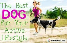 Sporty Dogs: The Best Breeds for Active People via @SparkPeople