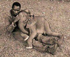 Hush little Elephant. Settling an orpaned elepfant baby. So precious! Elephant Love, Little Elephant, Elephant Gifts, Cute Baby Animals, Animals And Pets, Beautiful Creatures, Animals Beautiful, Baby Elefant, Wild Animals Photos