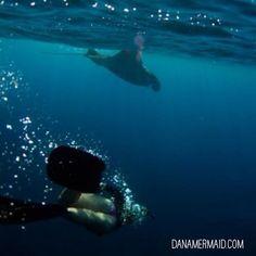DanaMermaid.com Photo credit @Sarah Lee  #mermaid #ocean #mermaidtail #danamermaid