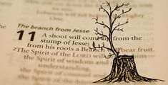 """Here is the fulfillment of Jeremiah's prophesy of the """"righteous branch"""" and Isaiah's prophesy of the """"shoot from the stump of Jesse"""". Have you ever wondered about Nathanael's strange remark in the Gospel of John? When told about Jesus of Nazareth, Nathanel responded """"What good can come from Nazareth?"""" (John 1:46) Since there are no throw-away phrases in the Gospels, especially in John's Gospel, what could this mean?"""