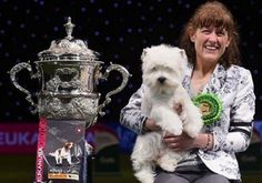 Westie took top honors at Crufts and a dog named Eric stole the internet's heart...