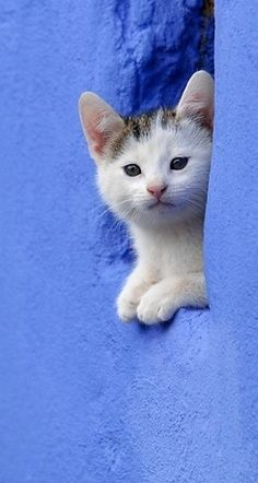Kitten Peering Out Of Hole In Blue Stone Wall