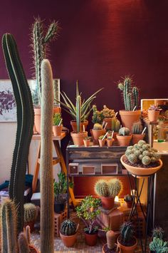 JOELIX.com | Les Succulents Cactus shop in Paris...Clay Pots are everywhere! http://geraniumstreet.com/planters/