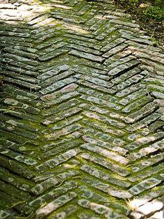 Brick path- How does the moss grow? Can I use yogurt?