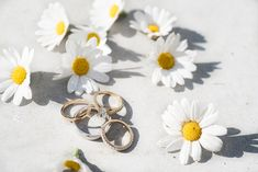 Wedding rings and daisies at a Tinakilly Country House wedding. A real wedding by Couple Photography. Wedding Shoes, Wedding Rings, Daisies, Couple Photography, Real Weddings, Gemstone Rings, Country, Diamond, Couples