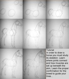 Horse Tutorial by *ResidualHaunt