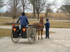 Checking out the pony cart-taking milk to the milk station.