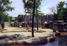 giraffes and zebras at the Columbus Zoo in 1997