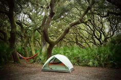 7 places in Georgia where you can camp right on the beach--Cumberland Island National Seashore—Sea Camp Campground 7 Places, Camping Places, Camping Spots, Beach Camping, Camping World, Tent Camping, Camping Gear, Campsite, Backpacking Meals
