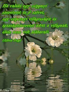 Szép, kedves idézetek, jókívánságok, szép képek: Ha valaki egy csöppnyi szeretetet és jó szívet....... Nicholas Sparks, Dale Carnegie, Ernest Hemingway, Osho, Einstein, Paulo Coelho