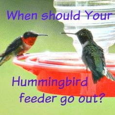 When should You hang up your Hummingbird feeder in the Spring? Find out here: www.wildbirdscoop.com/hummingbird-feeder-when-should-it-go-out.html