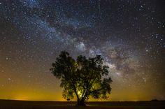 Olive tree silhouetted against Milky Way sky by João P. Santos.