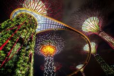 Singapore, Gardens by the Bay.  Opened in 2012. 220 000 plants on 101 ha. In 2015 20 million visitors. Ticket 15-28 dollars to greenhouses. Out of greenhouses free admission.
