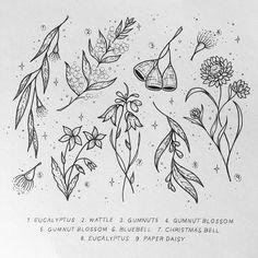 65 ideas nature tattoo flower flora for 2019 Australisches Tattoo, Tattoo Drawings, Australian Wildflowers, Australian Native Flowers, Small Flower Tattoos, Flower Tattoo Designs, Tattoo Flowers, Peta, Mother Nature Tattoos