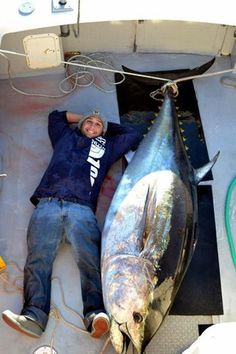 Tuna fishing report cape cod bay song