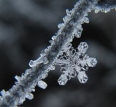 """Nature is full of genius, full of the divinity; so that not a snowflake escapes its fashioning hand.""  Henry David Thoreau quotes (American Essayist, Poet and Philosopher, 1817-1862)"