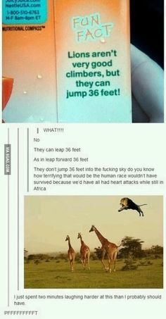Lions can jump 36 feet. Laughed more than I should at this!