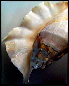 Shell     bB