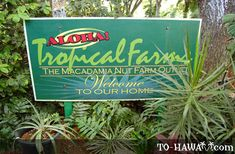 This macadamia nut farm is on the east side of Oahu.  This is a great place for macadamia nuts...so many different flavors and samples.  If you open the link there is more info like price, hours etc