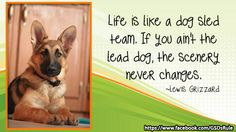 1000 images about german shepherd how to 39 s on pinterest dog hot spots bully sticks and. Black Bedroom Furniture Sets. Home Design Ideas