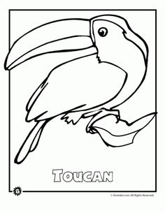 Superior Most Of These Endangered Species Once Lived In Your Own Back Yard If You  Live In The United States Or Canada. Here Are 9 Endangered Animal Coloring  Pages.