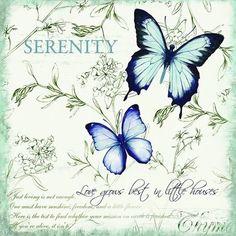 Serenity tag