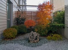 Japanese-Courtyard-Garden-autumn-leaves-Reffert
