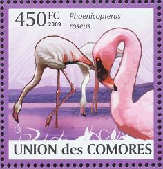 Greater Flamingo stamps - mainly images - gallery format