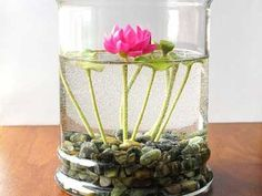 Indoor Container Gardening Miniature Pink Lotus Water Lily Terrarium - We have showcased a series of indoor plant ideas, herbs and fun beautiful ideas and take son flower pots we hope you will enjoy and find inspiring.
