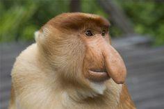 самые странные животные мира: 39 тыс изображений найдено в Яндекс.Картинках