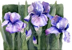 """Irises""  no better name for this reminder of life after winter"