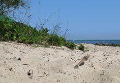 Beach, Baltic Sea, Schleswig-Holstein