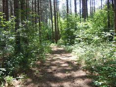 Robert Graham Conservation Area, Glen Stewart, Ontario