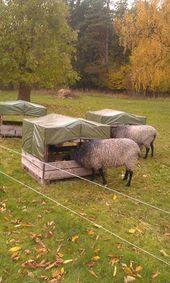 Gentle furnished goat backyard farming Money Back Guarantee - Nutztiere Sheep Feeders, Goat Hay Feeder, Sheep Pen, Mini Goats, Goat Pen, Raising Farm Animals, Goat House, Barn Animals, Farm Projects