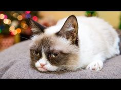 """All Your Favorite Celebrity Cats Star in """"Hard to Be a Cat at Christmas""""   For every view (up to 500,000 views), Friskies will donate one can of wet food to shelter rescue organizations across the country. (Plus it's adorable!)"""