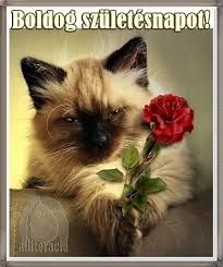 I brought you a flower! I love Siamese cats. Pretty Cats, Beautiful Cats, Animals Beautiful, Cute Cats, Funny Cats, Pretty Kitty, Crazy Cat Lady, Crazy Cats, Siamese Cats
