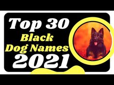 Top 30 Black Dog Names Male And Female With Meaning 2021 Unique Dog Names ! Pet Names - YouTube Popular Male Dog Names, Male Dog Names Unique, Dog Names Male, Cute Names For Dogs, Best Dog Names, Pet Names, Best Dogs, Cute Dogs, Dog Health Care