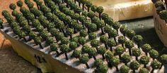 """Озеленение (бутафория)для жилого комплекса """"Лукино-Варино"""". Масштаб: 1:500 Для изготовления деревьев использованы бусины различного размера, зубочистки и покупная присыпка, имитирующая листву. На фото: для изготовления деревьев использованы бусины различного размера, зубочистки и покупная присыпка, имитирующая листву.#моделирование, #моделизм #макетздания #макетдома #макетирование #architecture #modeling #Modelism #building layout #house layout #breadboarding #scalemodels #workshop…"""