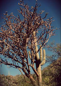 Alamo Springs and Wild Burro Hike, Marana, AZ.