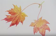 How to paint autumn leaves in watercolour