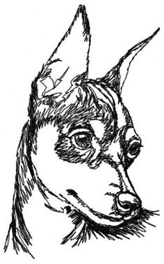 Fantastic Pinscher information is readily available on our site. Mini Pinscher, Miniature Pinscher, Cute Animal Drawings, Animal Sketches, Prager Rattler, Pincher Dog, Dog Grooming Shop, Dog Quilts, Muse Art