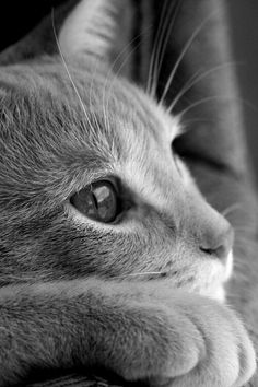 awesome black and white photo cat in thought