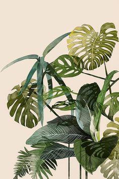Le illustrazioni di Agata Wierzbicka | PICAME