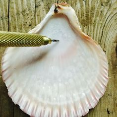 How to drill a hole in a seashell #artsandcraftsstores,