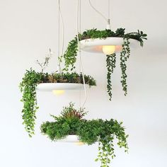 Babylon is a plantable light fixture. Create a cascading hanging garden with this cluster of three lights. The lights hang from a single large canopy and must be hung at different heights as there is approximately of overlap when hung. Indoor Garden, Garden Plants, Indoor Plants, Potted Plants, Indoor Outdoor, Silk Plants, Balcony Garden, White Pendant Light, Pendant Lights