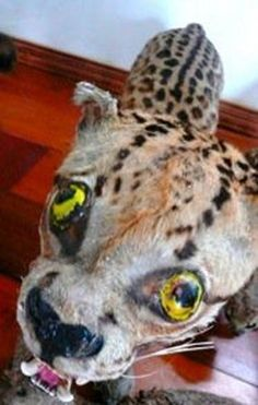 Taxidermy Gone Wild Bad Taxidermy, Stamp Collecting, Bird Watching, Owl, Animals, Friends, Otter, Kangaroo, Amigos